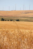 Wheatfields und Windfarms Stockbilder