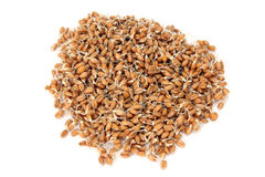 Wheatgerms  Stock Image