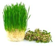 Wheatgrass汁液用绿色萝卜 免版税图库摄影