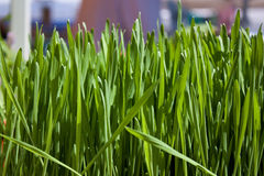 Wheatgrass Photos stock