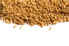 Wheatgrass Стоковое Изображение
