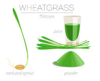 Wheatgrass Royalty-vrije Stock Fotografie