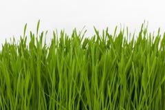 Wheatgrass Royalty-vrije Stock Foto's