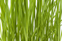 Wheatgrass close up Royalty Free Stock Images
