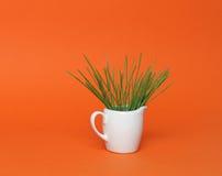 Wheatgrass en taza del souce Imágenes de archivo libres de regalías