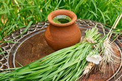 Wheatgrass juice in a clay pot on a brown wooden table Royalty Free Stock Image