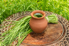 Wheatgrass juice in a clay pot on a brown wooden table Royalty Free Stock Photo