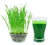 Wheatgrass juice Royalty Free Stock Photo