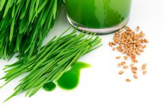Wheatgrass juice with sprouted wheat and wheat. Isolated on white background Royalty Free Stock Photos