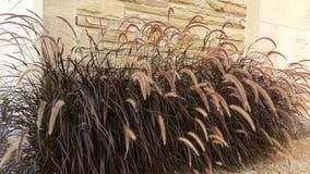 Wheatgrass and limestone Royalty Free Stock Photo