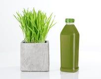 Wheatgrass och flaska av grön fruktsaft arkivfoto