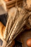 Wheatgrass op de broden en de houten lijst stock foto