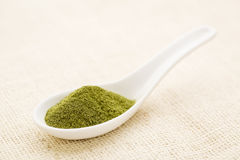 Wheatgrass powder Stock Image