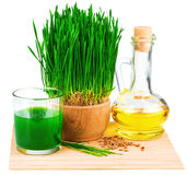 Wheatgrass-Saft mit gekeimtem Weizen- und Weizenkeimöl auf dem m Stockbilder