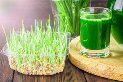 Wheatgrass skott Fruktsaft från vetegräs Trend av hälsa Fotografering för Bildbyråer