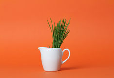 Wheatgrass  in souce cup Royalty Free Stock Photos