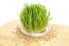 Wheatgrass sur le bois images stock