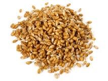 Wheatgrasszaailingen - Gezonde Voeding stock afbeeldingen