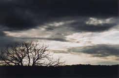 Wheather the Storm. A silhouette of an old oak tree that has survived another storm royalty free stock photos