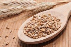 wheatmeal Photographie stock libre de droits