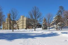 Wheaton à l'hiver Images libres de droits