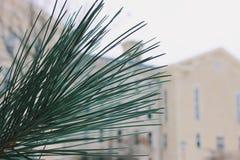 Wheaton College im Winter Lizenzfreies Stockfoto