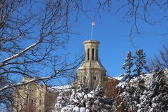 Wheaton am Winter Lizenzfreies Stockfoto
