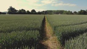 Wheats zbiory wideo