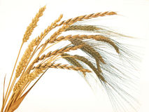 Wheats Royalty Free Stock Photos