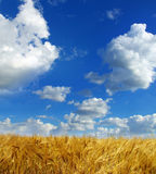 Wheats Royalty Free Stock Image