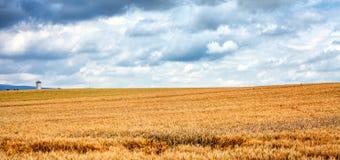 Wheats Makro- szczegół w polu Zdjęcie Royalty Free