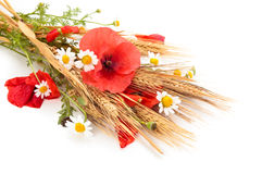 Wheats and poppies in bouquet. Stock Image