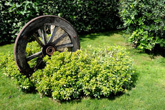 Wheel. A very ancient wheel cart royalty free stock images