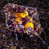 Wheel Barrel full of leaves and pumpkins Royalty Free Stock Photography