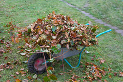 Wheel barrow with cutted branches and leaf litter front view. Wheel barrow with cutted branches and leaf litter on the green grass front view Royalty Free Stock Photography