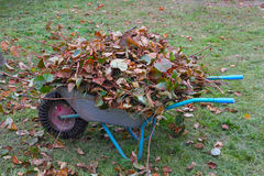 Wheel barrow with cutted branches and leaf litter rear view Stock Image