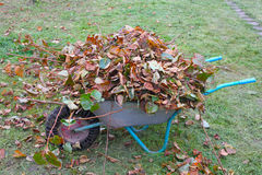 Wheel barrow with cutted branches and leaf litter side view Stock Photos