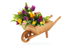 Wheel barrow full tulips Royalty Free Stock Images