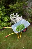 Wheel barrow on the grass in the garden with plants flowers and leaves. Wheel barrow on the grass in the garden with plants nice flowers and leaves Stock Images