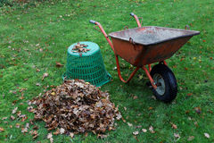 Wheel barrow and leafes. Autumn is the time to collect the oak leafes in a wheel barrow Stock Image
