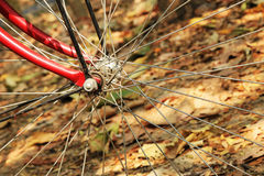A wheel of bicycle closeup on the background of the dry colorful leaves. Stock Image