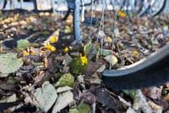 Wheel of bike with leaves in autumn Royalty Free Stock Images