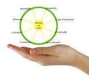 Wheel of life. Presenting Diagram of wheel of life Stock Image