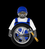 Wheel repair. Cute cat isolated on black Royalty Free Stock Photography