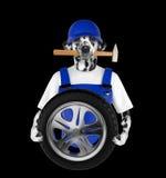 Wheel repair. Dalmatian dog isolated on black Stock Photo