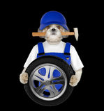 Wheel repair. Shitzu dog isolated on black Royalty Free Stock Images