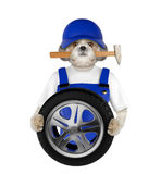 Wheel repair. Shitzu dog isolated on white. Background Royalty Free Stock Photos
