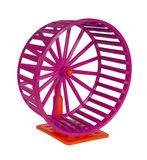 Wheel for rodents Royalty Free Stock Image