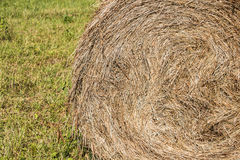 Wheel shaped haystack. Freshly wheel shaped haystack recently harvested in a grass field Royalty Free Stock Photo