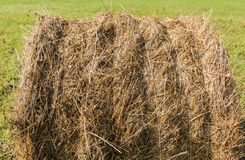Wheel shaped haystack. Freshly wheel shaped haystack recently harvested in a grass field royalty free stock photography